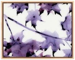 New Moon, Horizontal Botanical Painting on Mylar in Purple on White