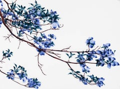 Outreach Cs1, Horizontal Botanical Tree Painting on Mylar in Dark Blue and Teal