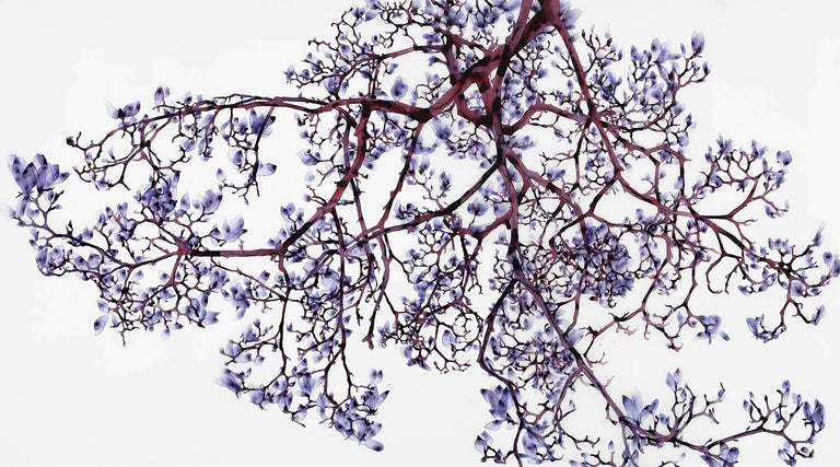 Layers of foliage in shades of lavender, violet and pale purple grace delicate dark brown branches with hints of maroon and burgundy on the pristine white background of this large horizontal painting in acrylic on mylar mounted on acrylic panel.