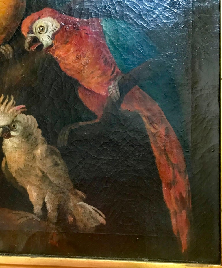 Jacob Bogdani Follower, Still Life with Parrots Oil on Canvas For Sale 3