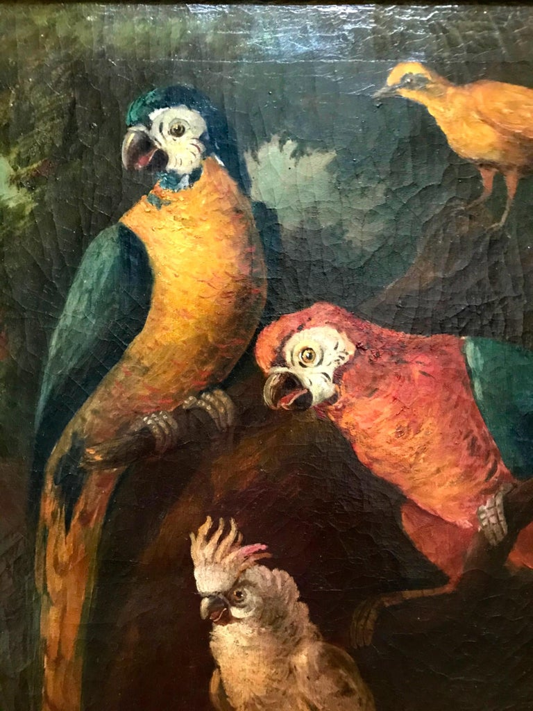 Hand-Painted Jacob Bogdani Follower, Still Life with Parrots Oil on Canvas For Sale