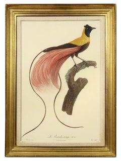 BARRABAND.  Two Birds of Paradise
