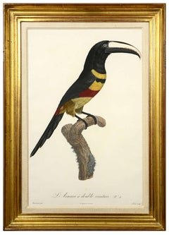 Jacques Barraband, A Set of Six Aracaris, 1806