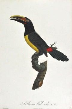 Jacques Barraband, L'Aracari verd male. No 16.