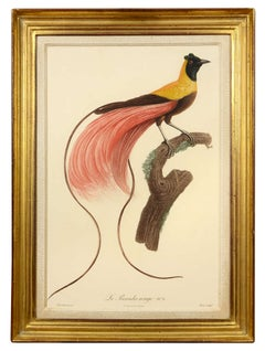 Jacques Barraband, Pair of Birds of Paradise, 1806