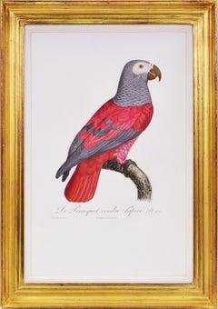 Jacques Barraband, Set of Four Parrots, Engravings, 1805