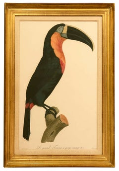 Orange Animal Prints