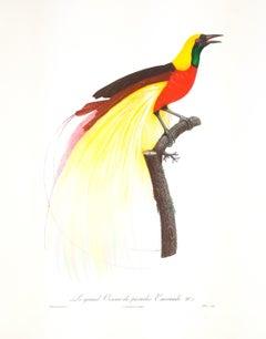 Le Grand Oiseau de Paradis Emeruade No. 1