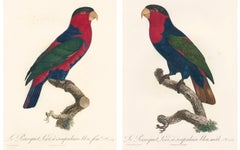 Pair of Parrot Prints