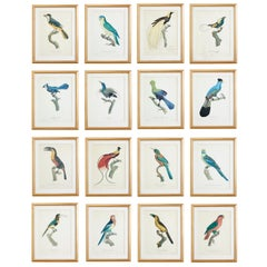 Set of 16 Hand Colored Etchings