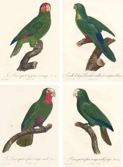 Set of 4 Green Parrot Prints