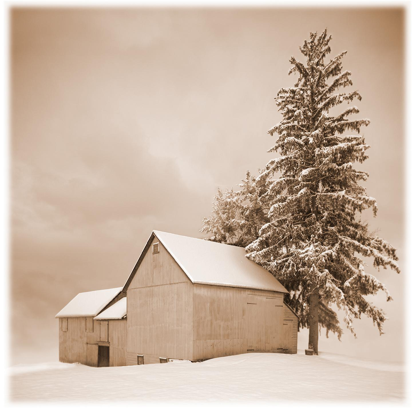 Barn, New Concord (A tranquil winter scene of Barn and Evergreen in Sepia)