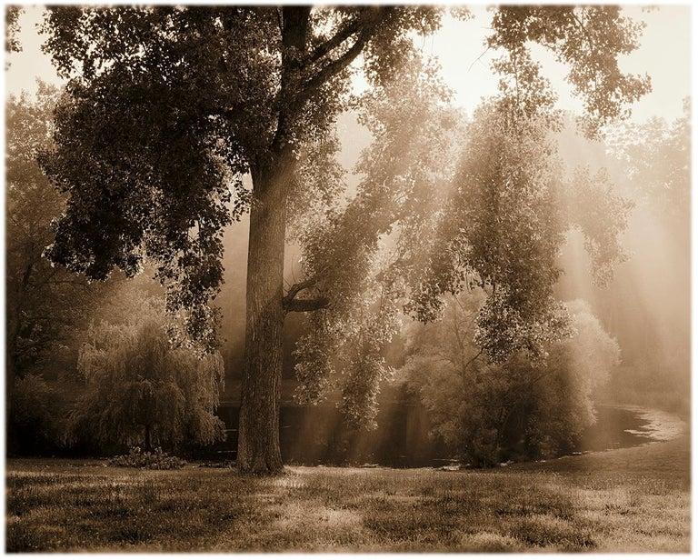 James Bleecker Landscape Photograph - Tree and Pond, Ghent (Sepia Toned Pigment Print of a Sunlit Landscape)