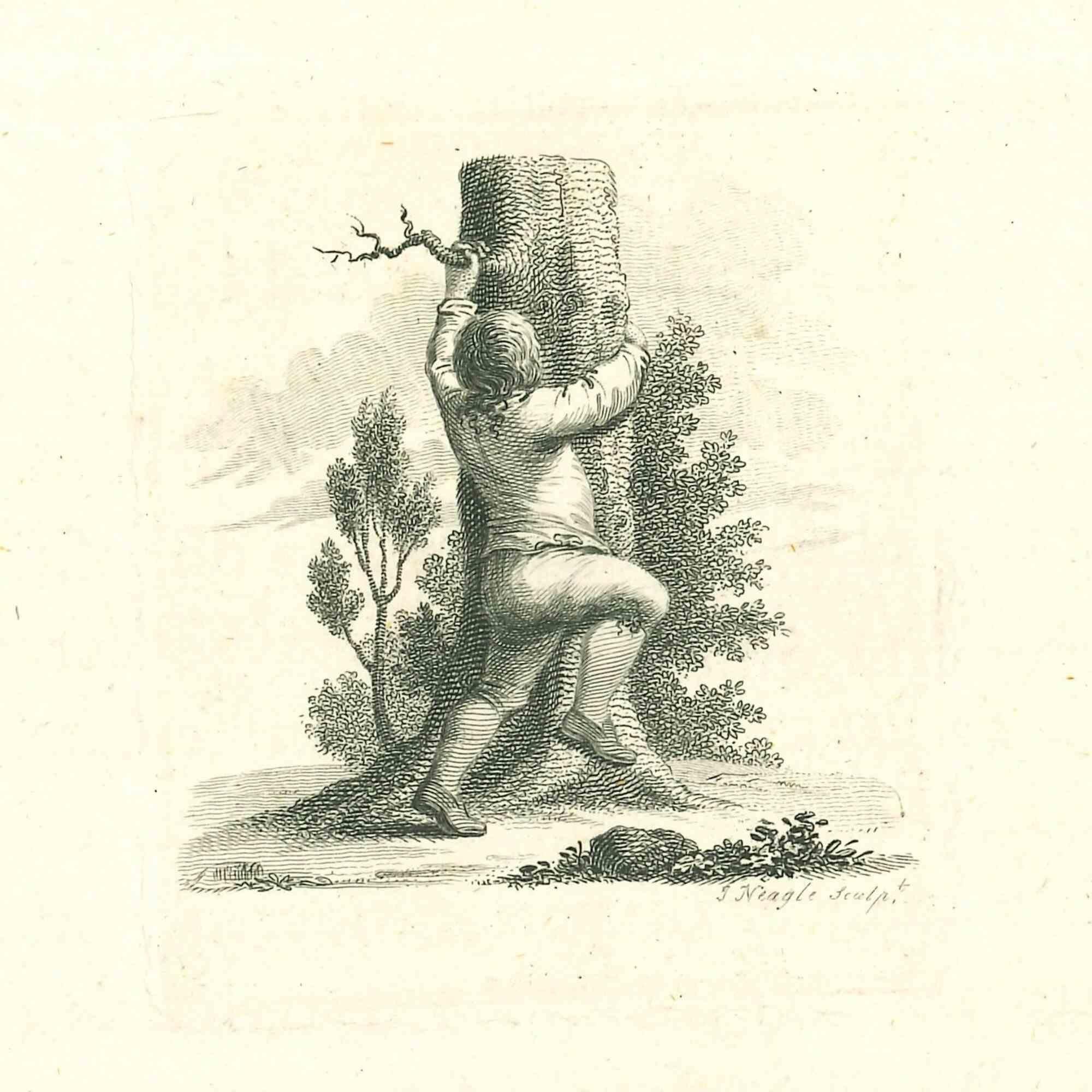 A Boy Climbing a Tree - Original Etching by James Neagle - 1810
