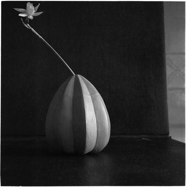 James Pitts Black and White Photograph - Tiny Daffodyl in Green Japanese Squash Vase