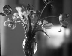 Tulips in Granny's Green Vase Soft