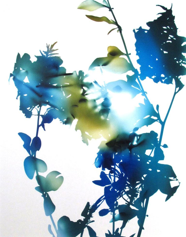 """10B (from """"Flowers"""") - Photograph by James Welling"""