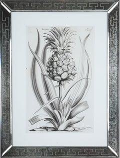 Jan & Caspar Commelin: 17th Century Botanical Engraving, 1st Edition