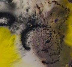 Tiger's Eye III