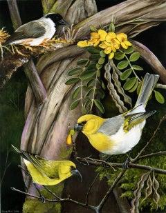 Hawaiian Honeycreepers / acrylic bird painting