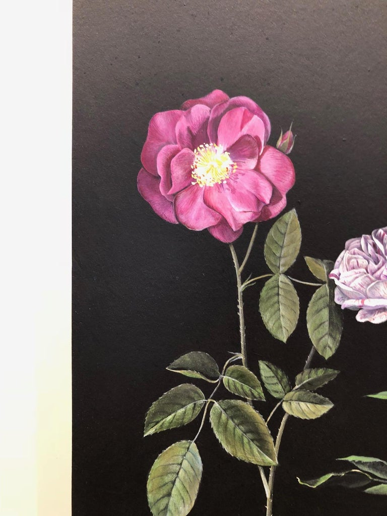 Man Made: Evolution of Roses For Sale 7