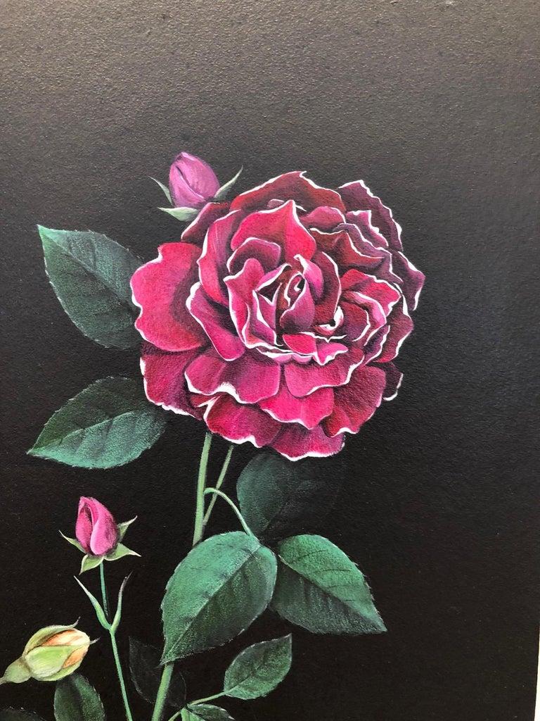 Man Made: Evolution of Roses For Sale 10