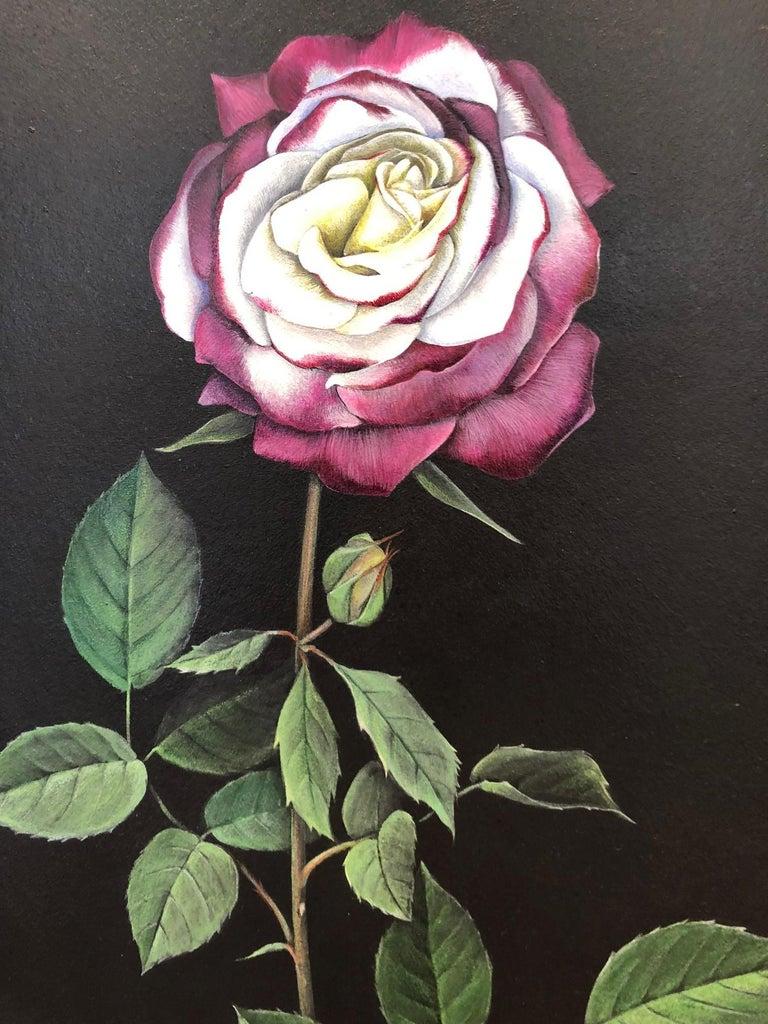 Man Made: Evolution of Roses For Sale 1