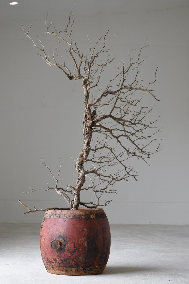 It is an old Japanese drum. It is an item from the Edo period. Made of zelkova tree. This is very rare.  It cannot be used as a drum, but Please use it as a plant cover.  The color and taste are beautiful. It is a unique existence.