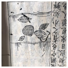 Japanese Antique Shell Fish Woodblock Guide Book Dated 1712