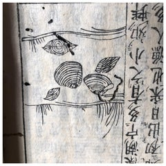 Japanese Antique Shell Fish Woodblock Guide Book Dated 1712, Rare Edition