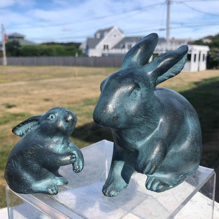 Japanese Big Blue Rabbits  For Sale 10