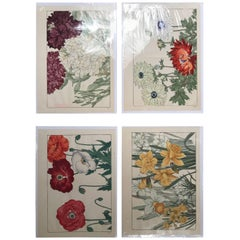 Japanese Old Woodblock Flower Prints Tanigami Konan Immediately Frameable #3
