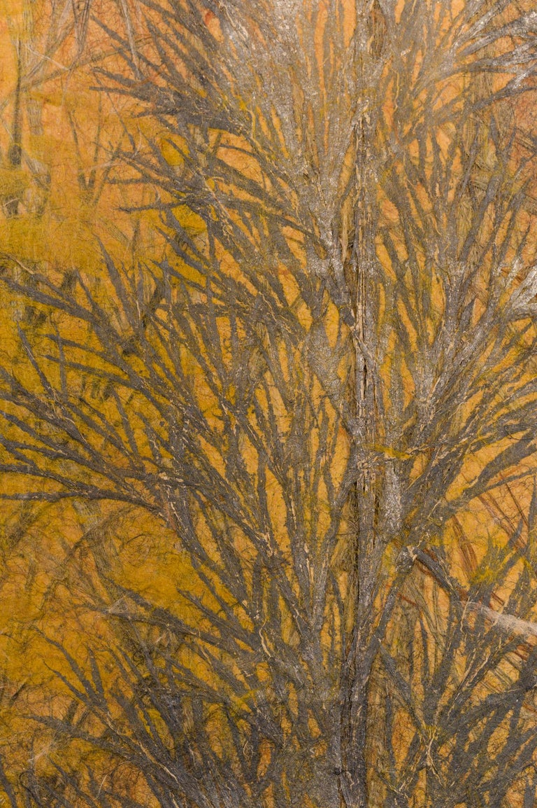 Japanese Two Panel Screen Late Autumn Forest, Rare Obara Paper Art Screen For Sale 4