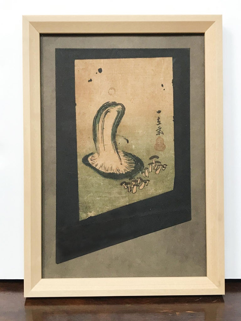 Framed Japanese woodblock print depicting a study of a mushroom. Early 20th century. Ukiyo-e art depicts a vast array of subjects, including flora and fauna illustrations such as this beautiful study of an edible mushroom. The print is a fragment of