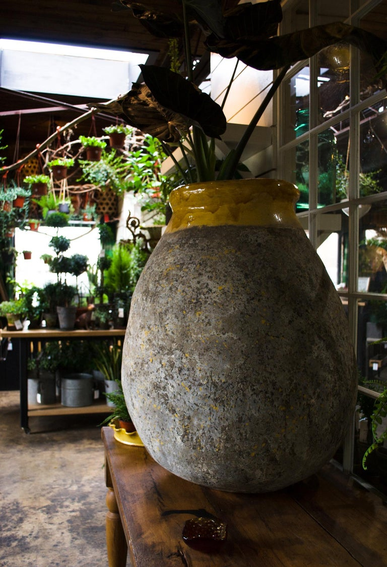 France has always been the pioneer of the European garden. These once functional olive jars eventually found their way to cascading gardens once retired, thus creating the iconic French garden aesthetic. Now, France continues to fuel this fantasy by