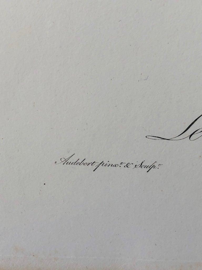 Jean-Baptiste Audebert Hand-Colored Engraving of a Patas Monkey 1