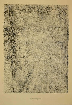 Chaussèe Grenue - Original Lithograph by Jean Dubuffet - 1959