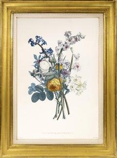 Jean Louis Prevost, Collection des Fleurs et des Fruits: a Set of Floral Designs