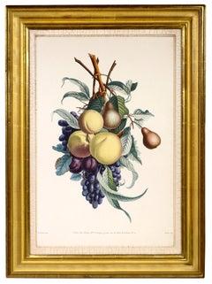 PRÉVOST. Print from a Collection des Fleurs et des Fruits