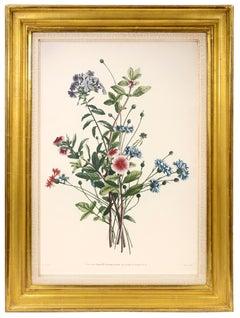 PRÉVOST. Print from Collection des Fleurs et des Fruits