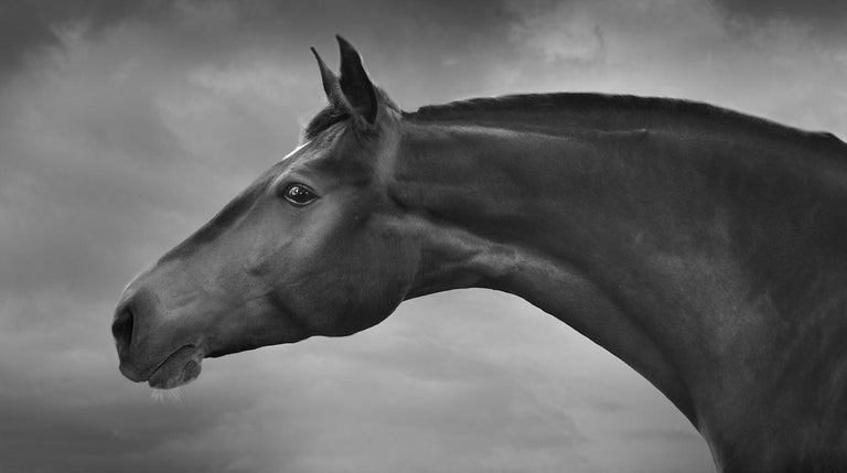 Jean-Michel Berts Black and White Photograph - Horses 3