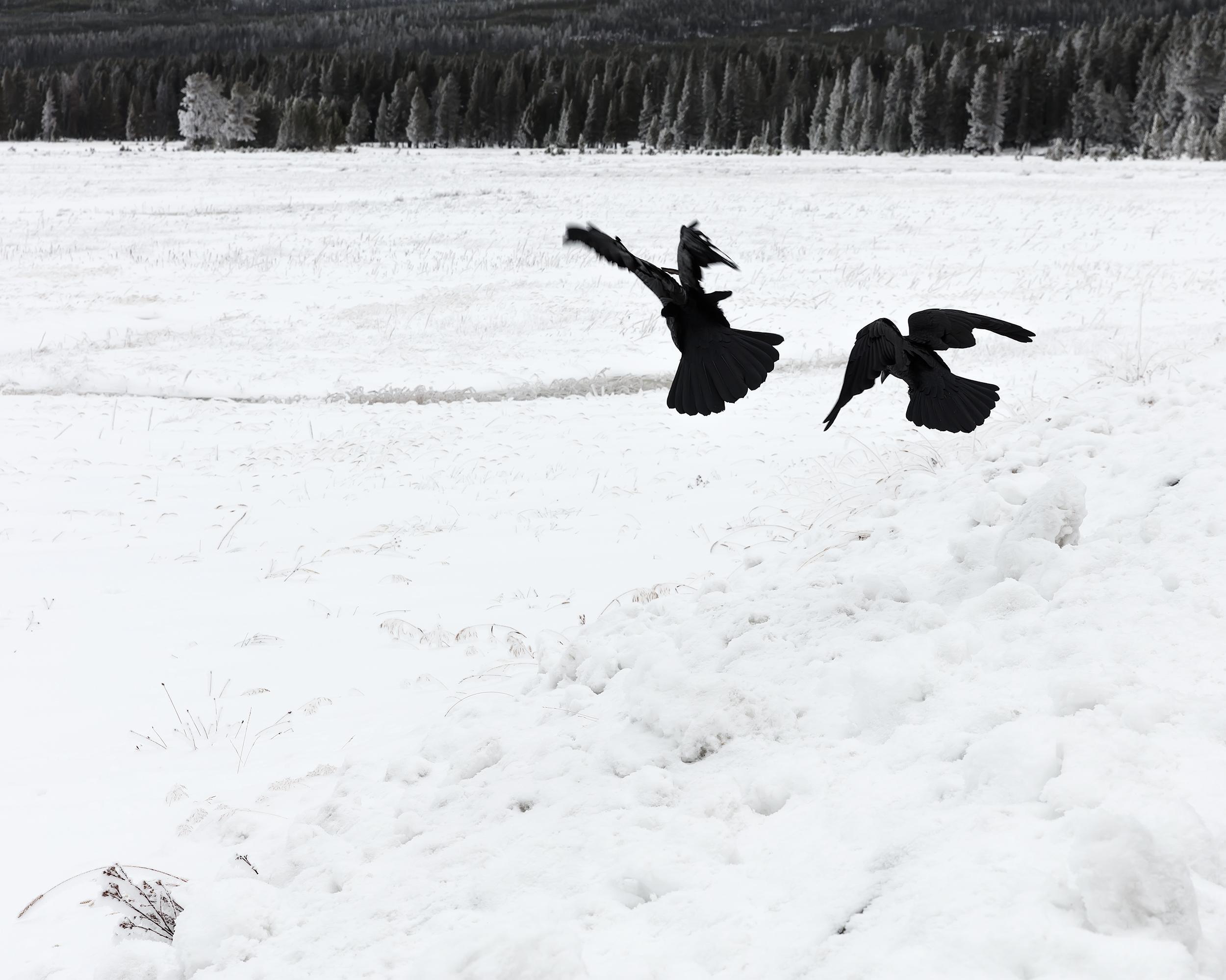 Special Flying Envoys, Montana
