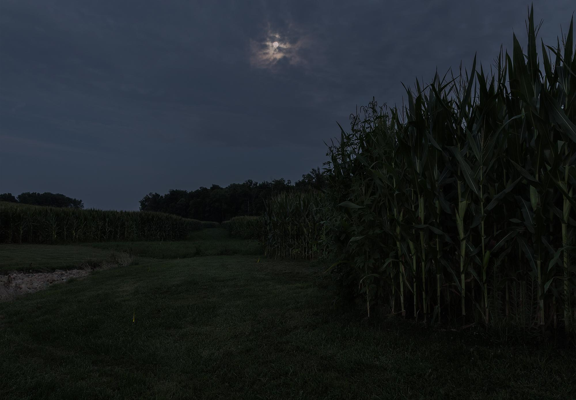 Taking Cover with the Fireflies. North of Winchester, Indiana