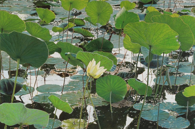 """Lotus Flower"", Contemporary Framed Photorealistic Oil Painting on Canvas"
