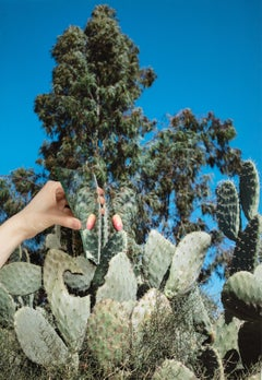 Always there where it can see me, color photograph of blue sky and cactus