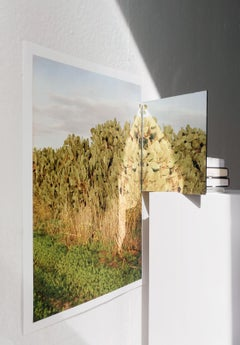 Mind point, contemporary color photograph of a photo, cactus