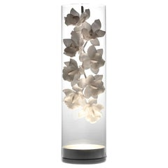 Beleuchtetes Gefäß mit Cymbidium-Orchideen, Jeremy Cole