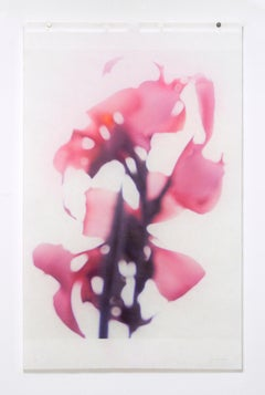 Canna No. 2 (Abstract Still Life Photograph of Pink Flower on White)