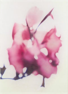 Canna No. 5 (Abstract Still Life Photograph of Magenta Lily Flower on White)