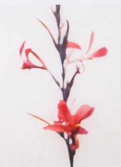 Canna No. 6 (Abstracted Still Life Photograph of a Magenta Lily Flower on White)